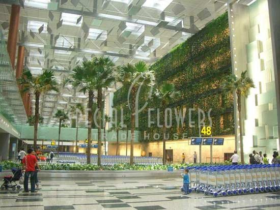 phoca_thumb_l_specialflowers_palm_airport_shipol_amsterdam.jpg