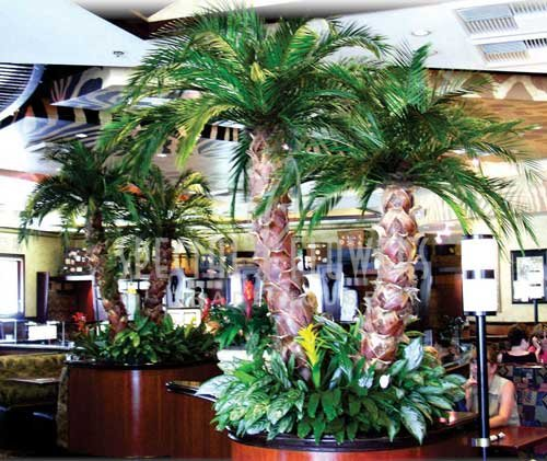 phoca_thumb_l_specialflowers_palm_restaurant (2).jpg