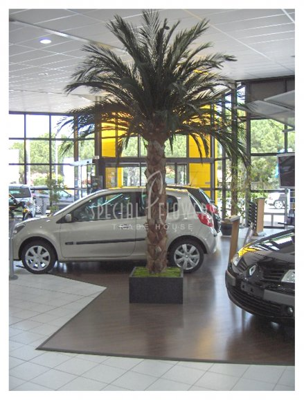 phoca_thumb_l_specialflowers_palm_renault.jpg